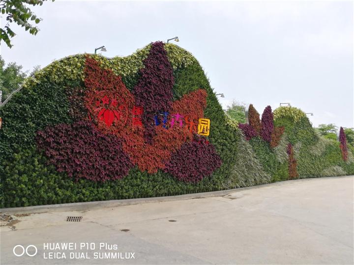 长沙植物墙|虚假植物墙