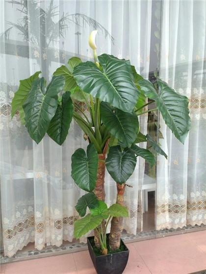 安徽绿色仿真植物|那里有仿真植物墙