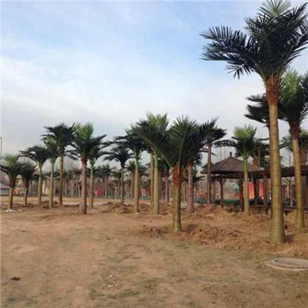 成都市仿真椰子树-肇庆仿真椰子树