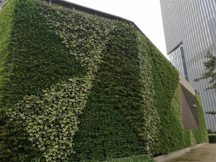 虚假植物墙公司,虚假植物墙厂家