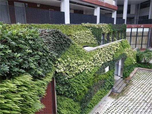 国外植物墙|国外绿植墙