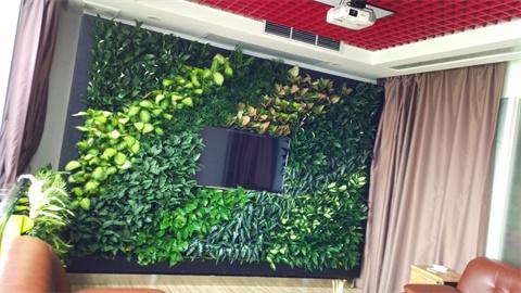 寺里绿植墙|寺里植物墙
