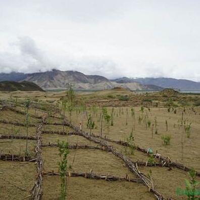 西藏�G化苗木