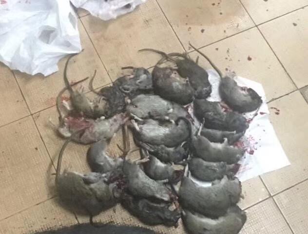 泉州医院灭鼠