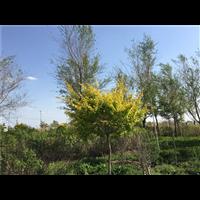 新疆城市园林绿化