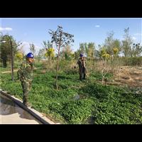 新疆绿化公司