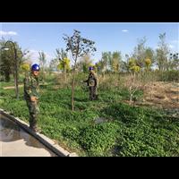 乌鲁木齐绿化工程