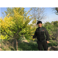 新疆园林绿化景观工程设计