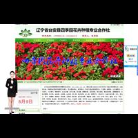 辽宁宿根花卉案例-2015版本