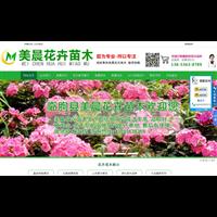 山东青州美晨花卉